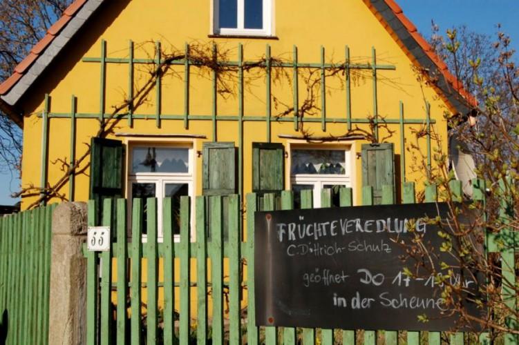 Dreiskau-Muckern, Früchteveredlung