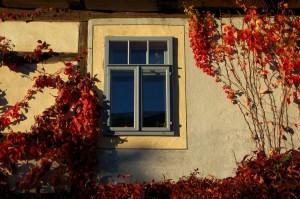 Naustadt, Fenster-Stillleben